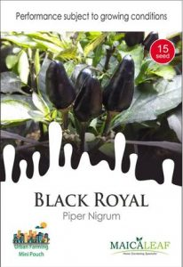 Royal Black Pepper Cabe Hitam, Sae Garden