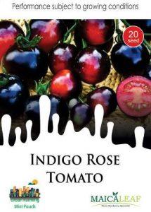 Indigo Rose Tomato Tomat Ungu, Sae Garden