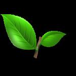 batang-daun