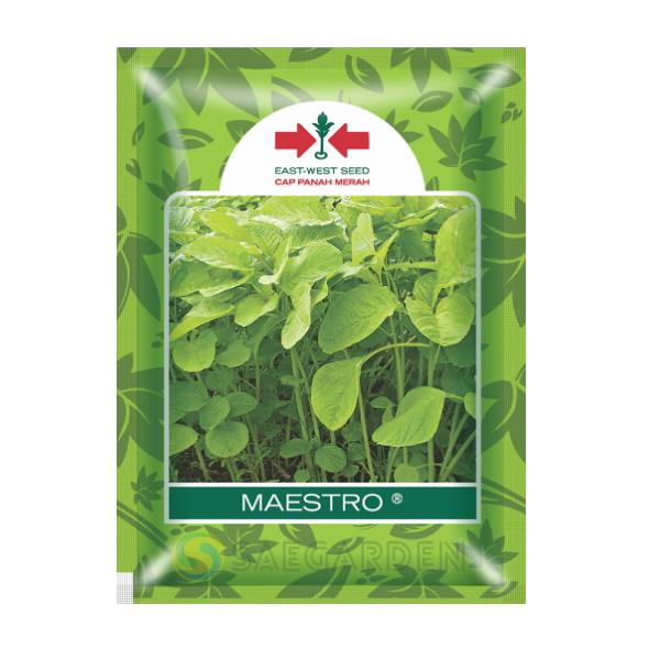 benih bibit bayam maestro panah merah