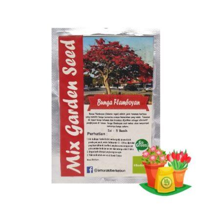 Benih Bunga Flamboyan Mgs 440x440, Sae Garden