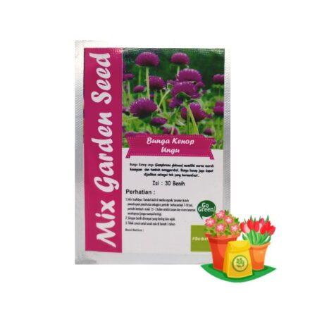 benih bunga kenop ungu mgs