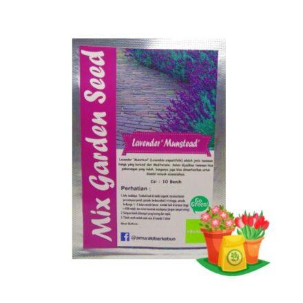 Benih Bunga Lavender Mgs 440x440, Sae Garden