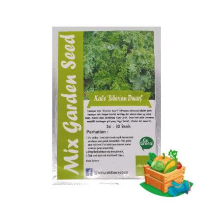 Benih Kale Siberian Dwarf Mgs 440x440, Sae Garden