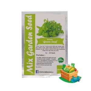 benih selada green leaf mgs
