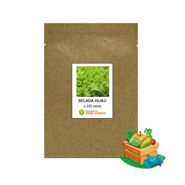 benih selada hijau rpk