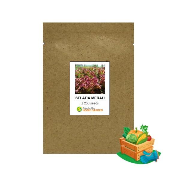 benih selada merah rpk