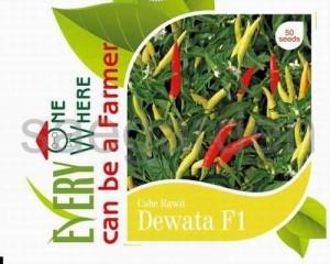 Cabe Rawit Dewata F1, Sae Garden