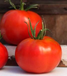Tomat Marglobe